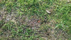 grass_close