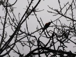 BirdShadow