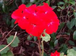 Oppo-N1-Rose