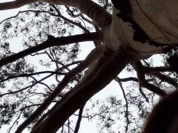Tree contrast – N1
