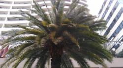 Kogan-Agora-4G-CameraSample-Tree