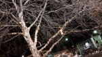Galaxy-TabS-Sample-TreeLightsHDR