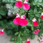 Flower - Close
